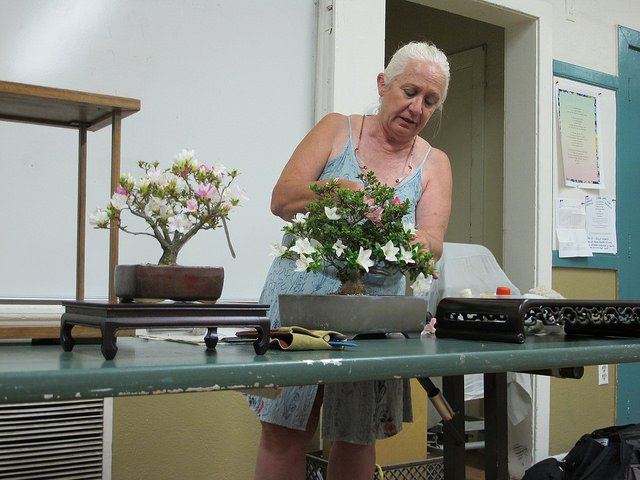 Ann Erb preparing a tree for presentation