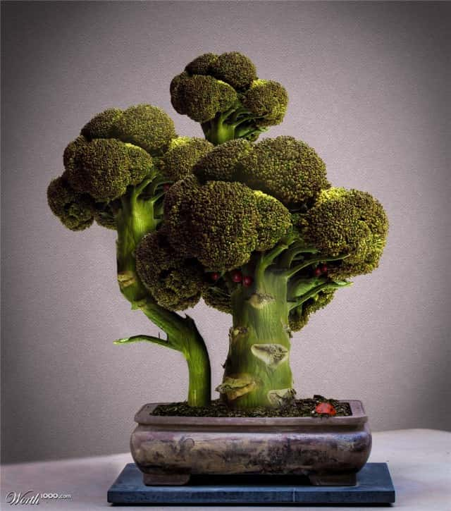 broccoli-bonsai