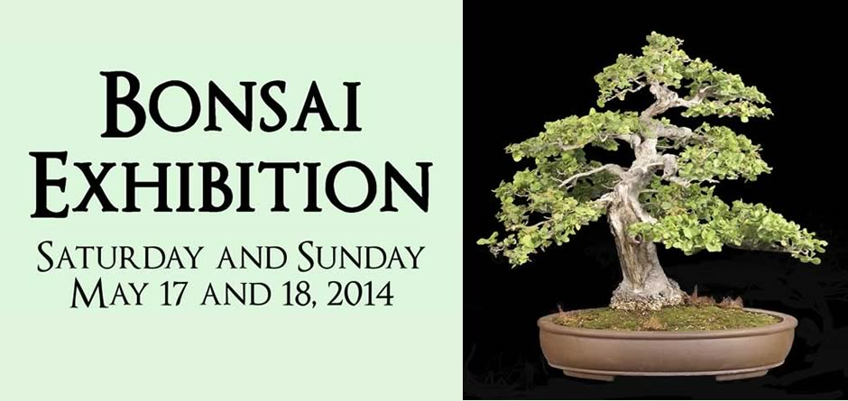 Bonsai Exhibition - Saturday and Sunday May 17 and 18, 2014